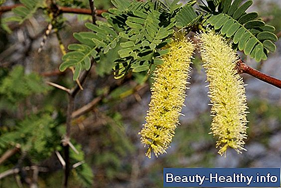 Mesquite Tree Allergier