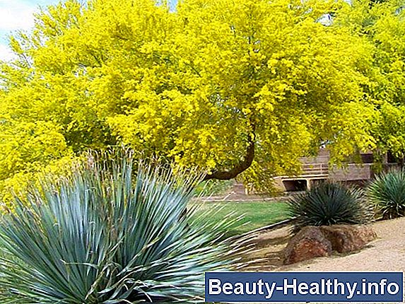 Mesquite Tree Allergies